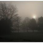 Foggy Foliage by KMorral