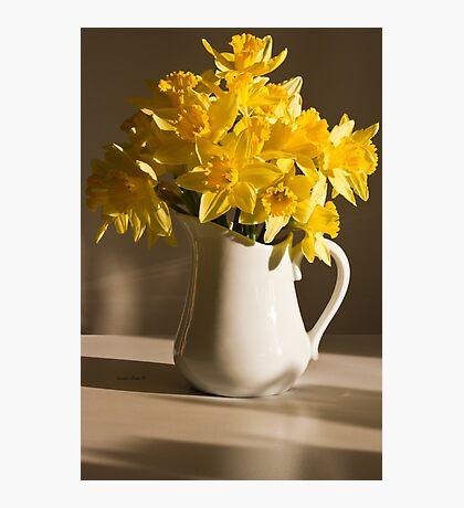 Daffodil Filled Jug Photographic Print