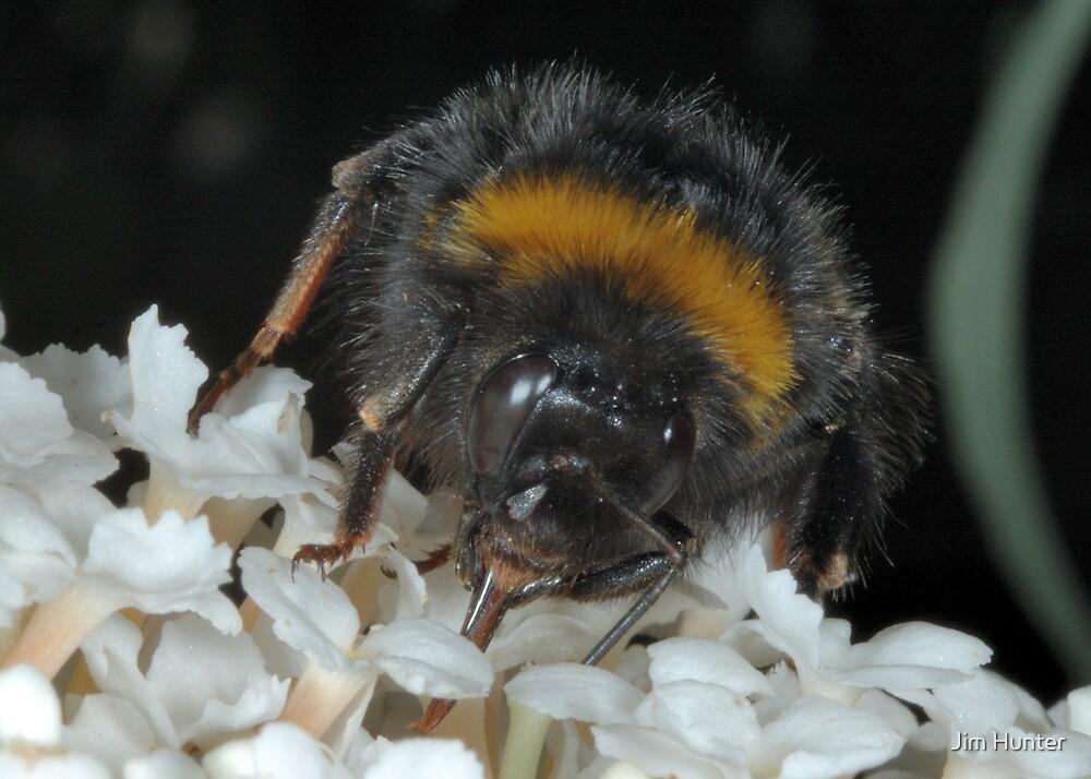 Hungry bee by Jim Hunter