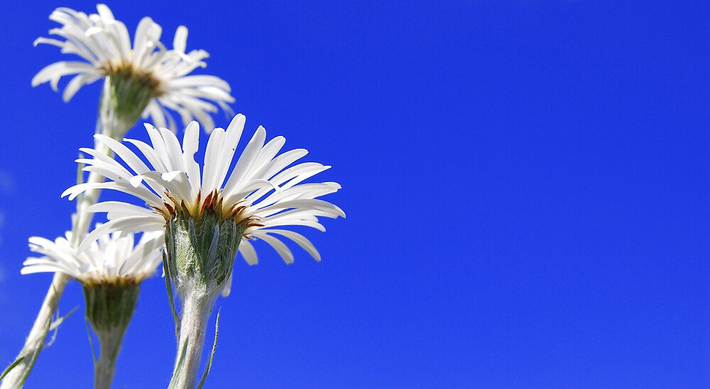 Sunny Days by Craig Ollis