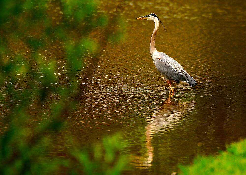 Taking a Moment To Reflect by Lois  Bryan