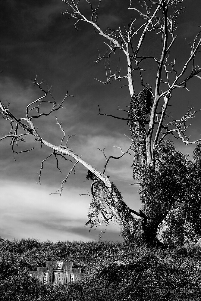Haunted Tree by Steven  Siow