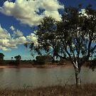 Lone tree at Old Onslow by myraj