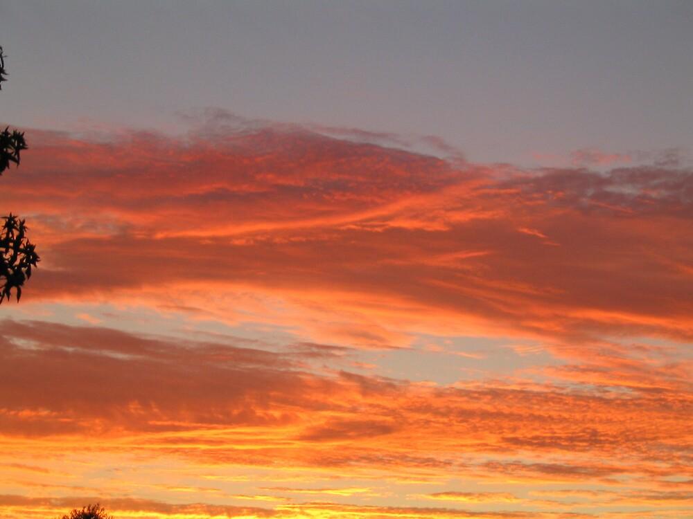 Backyard Sunsets by lazylightning