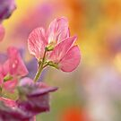 Sweet Pea Summer. by Todd Rollins