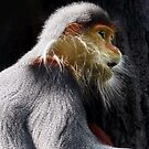 Portrait of a Douc's Langur by JulieM