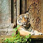 Tiger im Ruhezustand von Vickie Burt