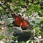 Butterfly Flies Away by nadiairianto