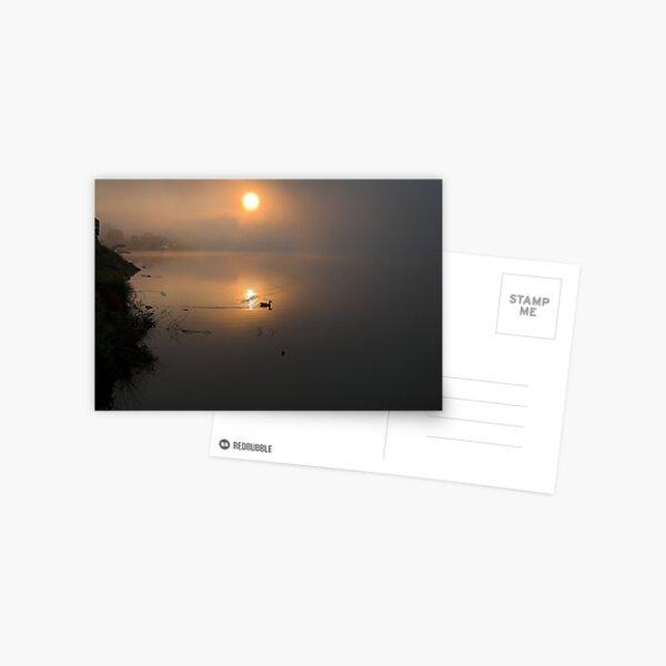 Mallard in Sunrise Postcard