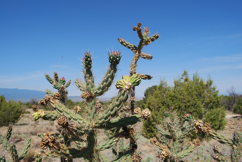 Cacti by jtodaworld