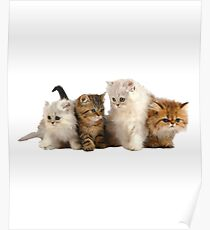 Beautiful cats Poster