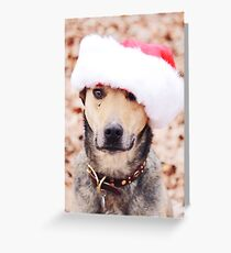 Holiday Hound Greeting Card