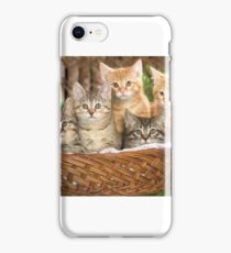 Beautiful Cats in the basket iPhone Case/Skin