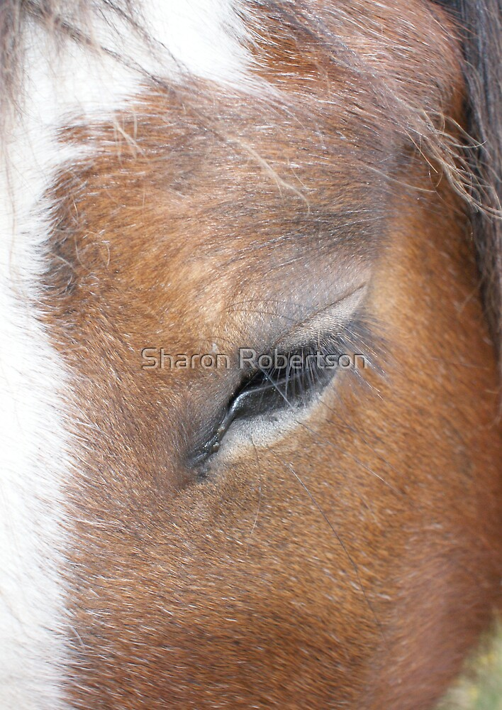 Clydesdale Eye by Sharon Robertson