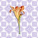 Daylily Lace by PatriciaSheaArt