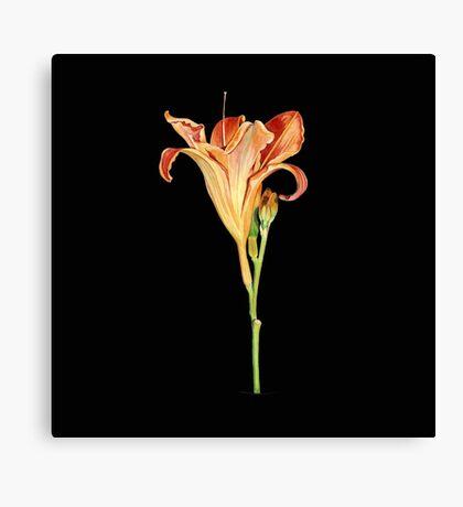 Orange Daylily Illustration Canvas Print