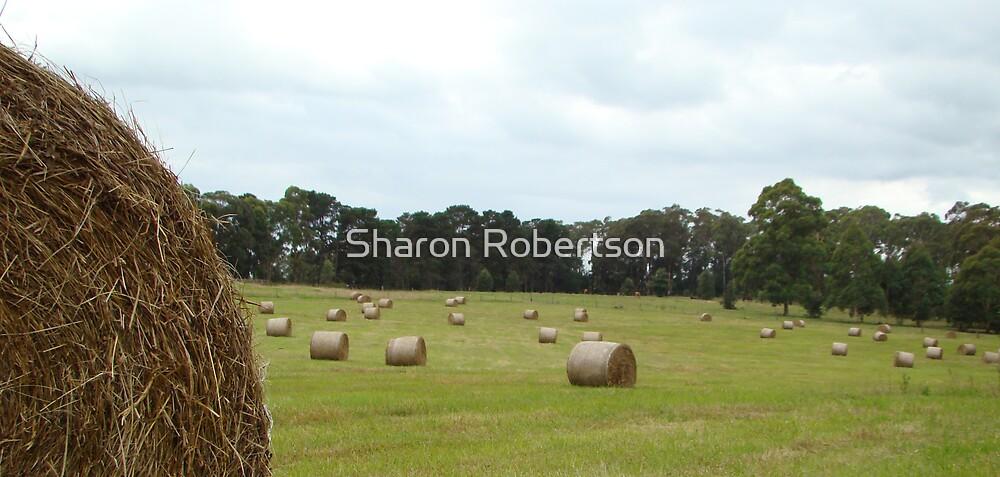 Hay Bales Paddock by Sharon Robertson