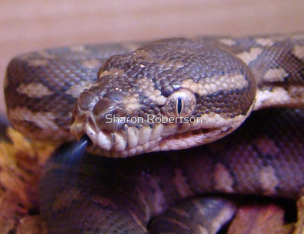 Python Snake Tongue by Sharon Robertson