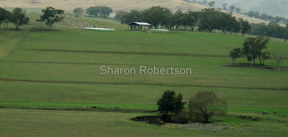 Country View by Sharon Robertson