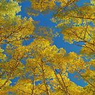 Aspen-Bäume gegen Himmel von OLena  Art ❣️