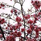 Blossom  by Elizabeth Duncan