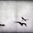Flight of the Ibis by Kitsmumma