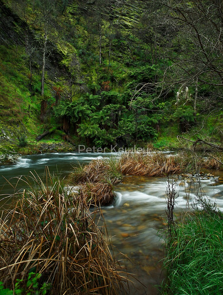 A River Somewhere  by Peter Kewley