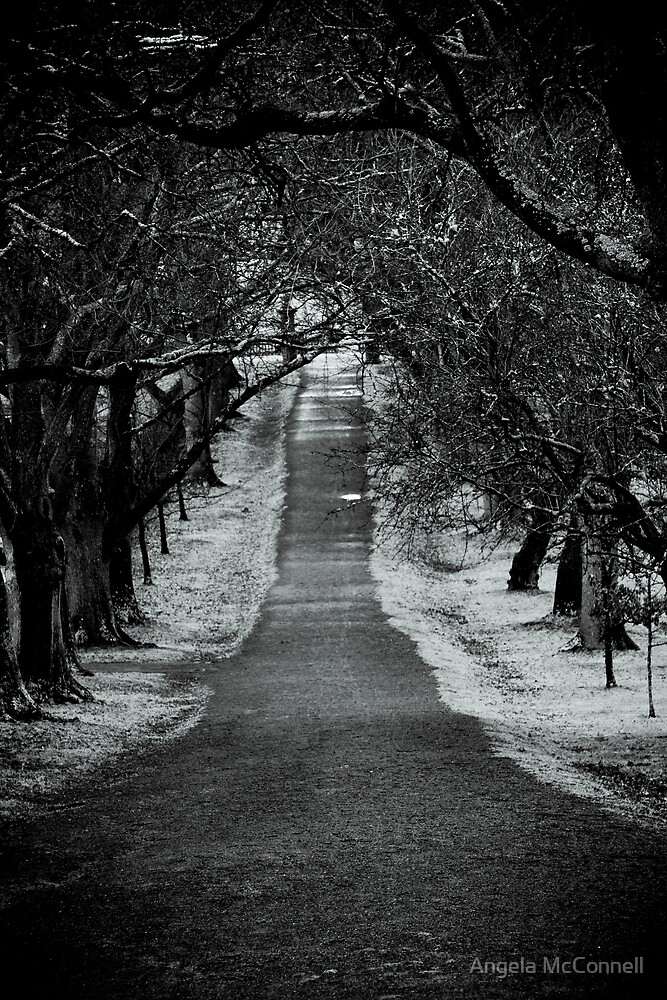 The Dark Path by Angela McConnell
