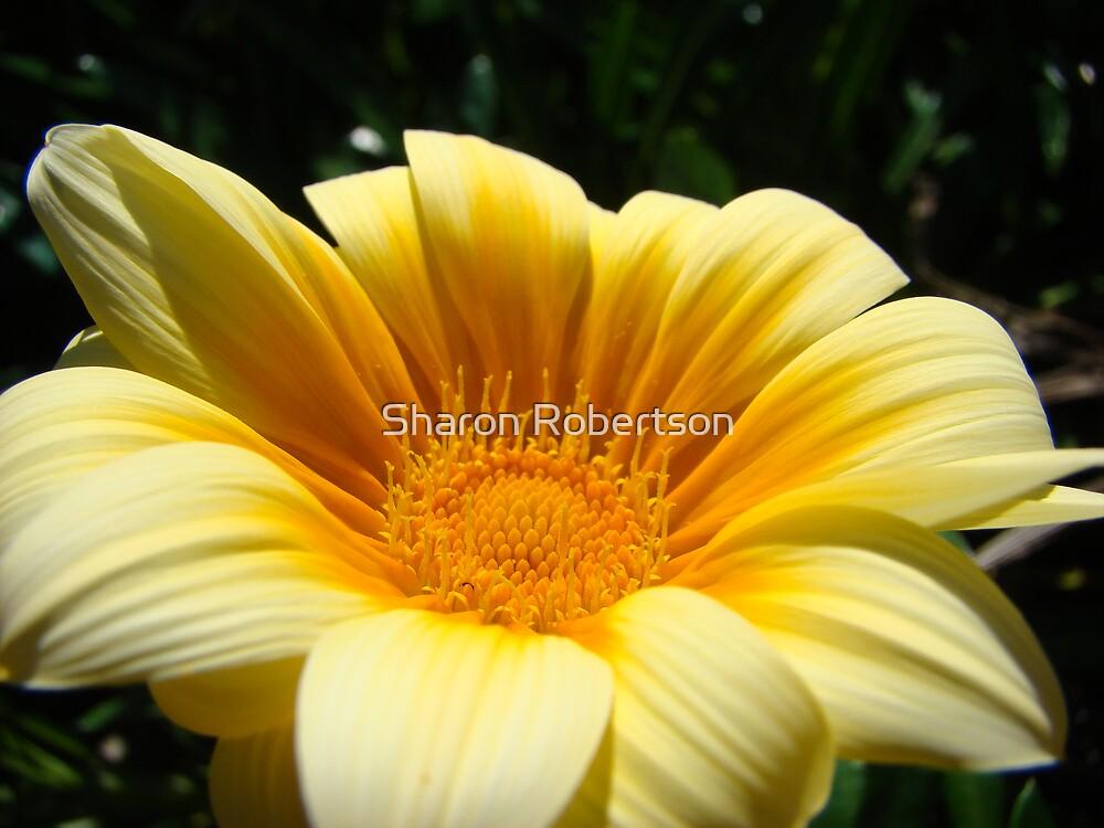 Yellow Daisy by Sharon Robertson