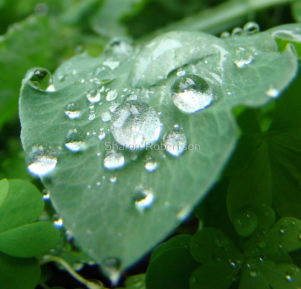Raindrops keep falling on my leaf... by Sharon Robertson
