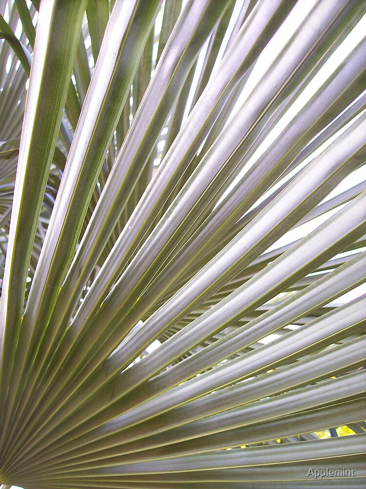 line and angle. (fronds) by Applemint