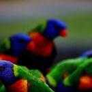 Rainbow Lorikeets in my garden by myraj