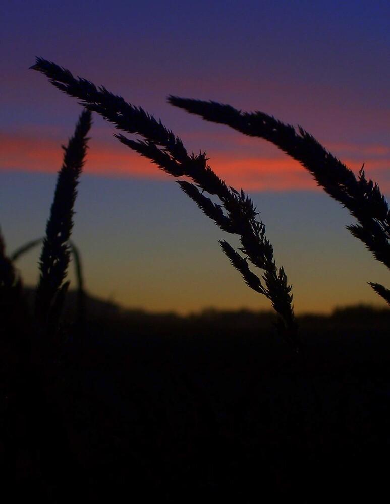 Tall Grass by babyangel