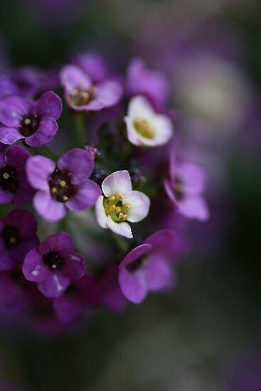 Flower Ball by Joy Watson