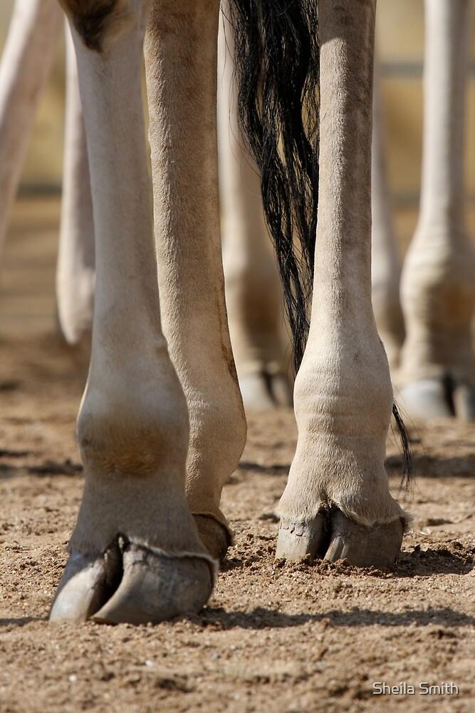 Legs  by Sheila Smith