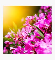 Pink flowers close-up, nature background Photographic Print