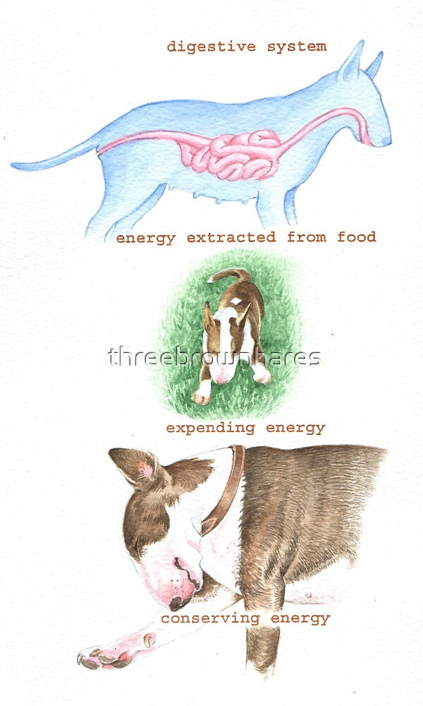 E IS FOR ENERGY From A Bull Terrier's Alphabet. by threebrownhares