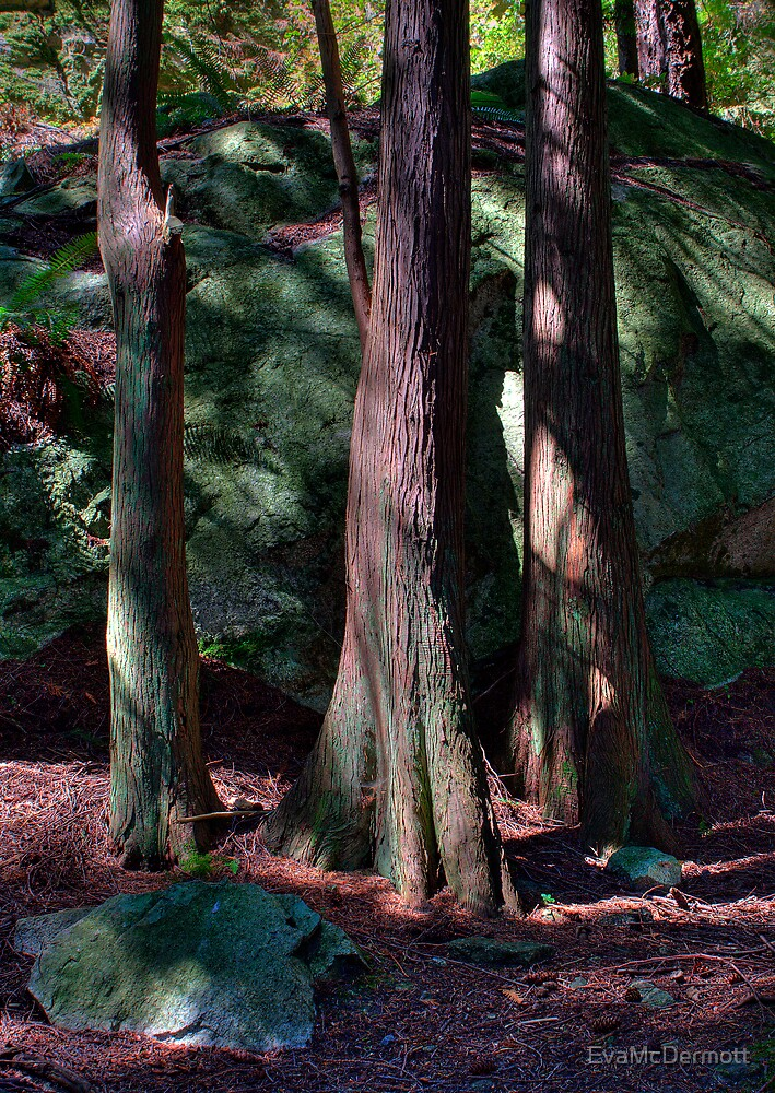 Trees at Lighthouse Park Vancouver by EvaMcDermott