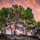 Trees and a fiery sky by Ralph Goldsmith