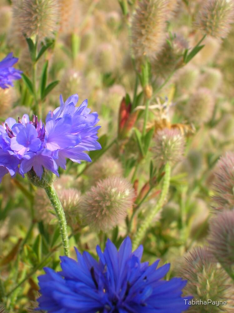 Purple Wild Flowers  by TabithaPayne