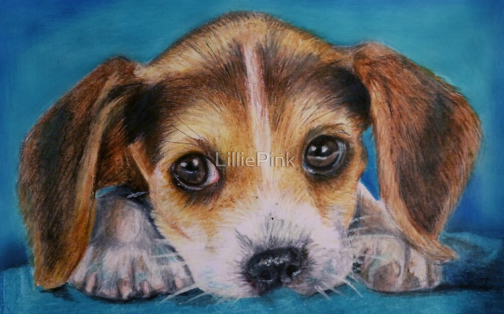Beagle Puppy Dog Drawing   by LilliePink