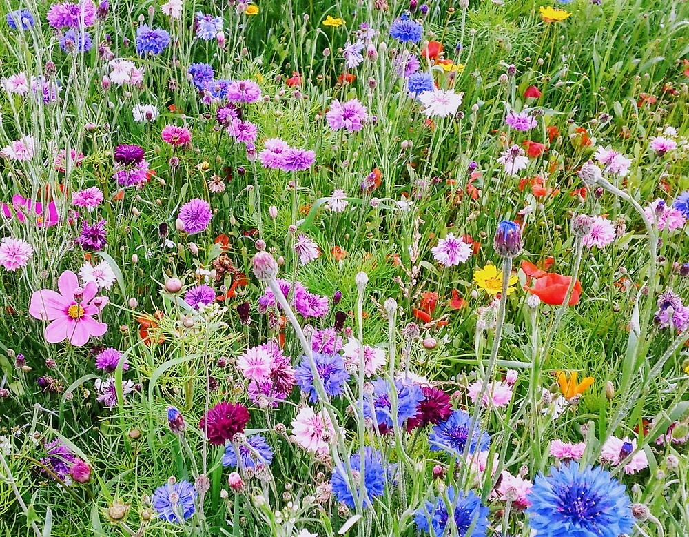 Scottish wildflower meadow by Florabell