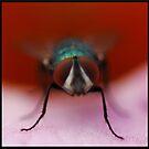 Super Fly by Jenifer