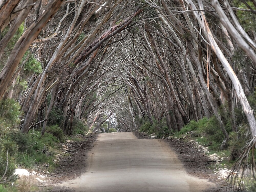 Straight and Narrow - Wattle Grove by Dean Wiles