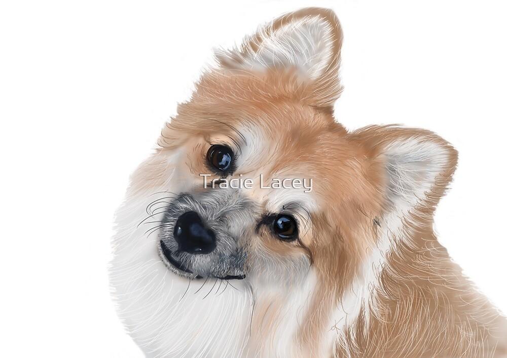 Pomeranian by majikalwhispers