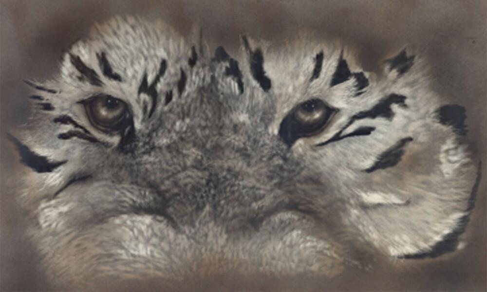 Tiger Eyes by Bill Dykes