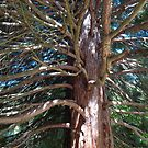 Below the old fir.... by Ana Belaj