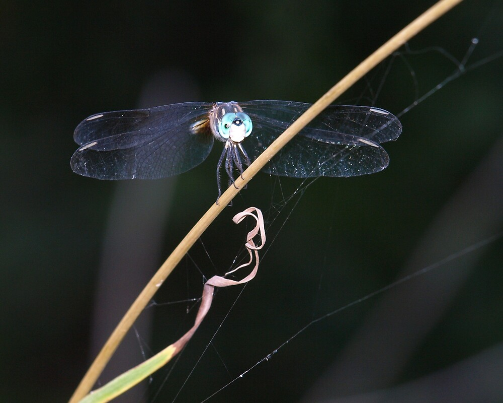My Dragonfly by Linda Mathews