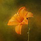 Orange Daylily by Sandy Keeton