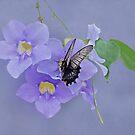 Butterfly Fluttering by Sandy Keeton